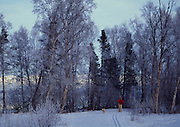 Crosscountry Skiing, Earthquake Park, Anchorage, Alaska<br />