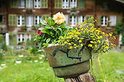 Blumen in Stechelberg