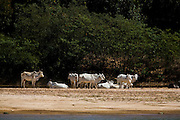 Sao Francisco_MG, Brasil...Rio Sao Francisco, o rio da integracao nacional. ..The Sao Francisco river, It is an important river for Brazil, called the river of national integration...Foto: LEO DRUMOND / NITRO