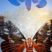 Tree Moths
