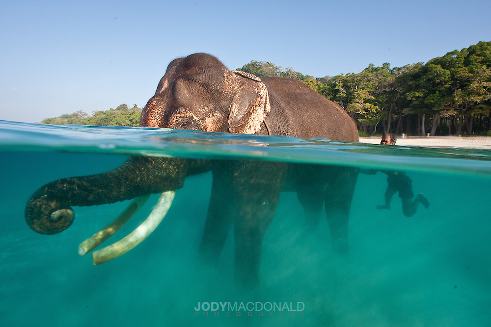 The bond between Rajan and his Mahout, or caretaker is fiercely...and beautifully strong