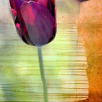 floral juxtaposition studies
