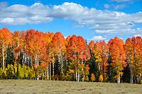 High country colors September 18, 2014 around Cedar Breaks , Utah