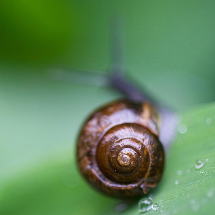 Snail.<br /> Stockholm Archipelago, Sweden