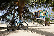Belize, Central America - Bicycle left against a palm tree on beach near dive school in Ambergris Caye