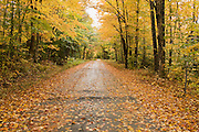 Leaf covered road through trees with yellow leaves.