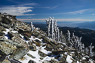These snow covered trees are found near the 8,000 foot summit of Ch-Paa-Qn Peak, Montana. This peak offers an amazing panoramic view of at least 5 different mountain ranges. As temperatures warmed up above freezing, chunks of snow were constantly falling off the branches.