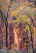 The Pulpit in autumn color at Temple of Sinewava, Zion Nationa Park, Utah.
