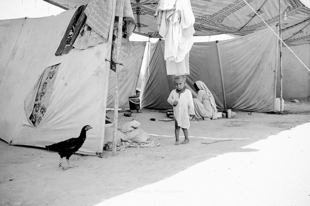 A chicken walks around in the tents now housing families affected by the floods. Sukkur, Pakistan, 2010