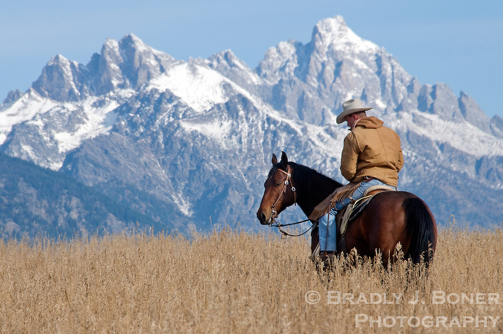 NEWS&GUIDE PHOTO / BRADLY J. BONER.Richie Maher pauses with his horse in a field at the Walton Ranch on Saturday morning. Maher was with a group of wranglers hearding cattle back to the ranch from summer grazing in South Park and Spring Gulch.