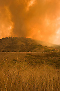 Dry Brush in Brea Canyon Firestorm, Southern California