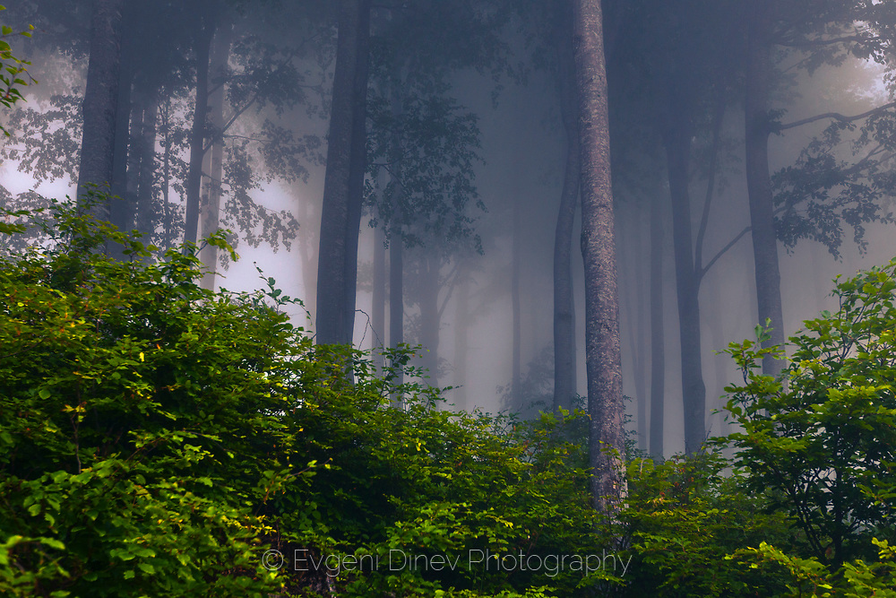Mazalat forest