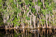 Reflections in the Turner River, Everglades, Florida, USA