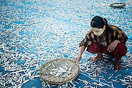 Myanmar, Ngapali. A girl works drying fish.<br /> Every single morning all the fisherman from the little village at Ngapali Beach come back home with their night catch. At the beach all the women wait for them and afterwards work with drying and selling fish and other creatures from the sea begins.