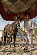 Groom with Marwari horse at the Mallinath Fair at Tilwara  near Balotra, Rajasthan, India
