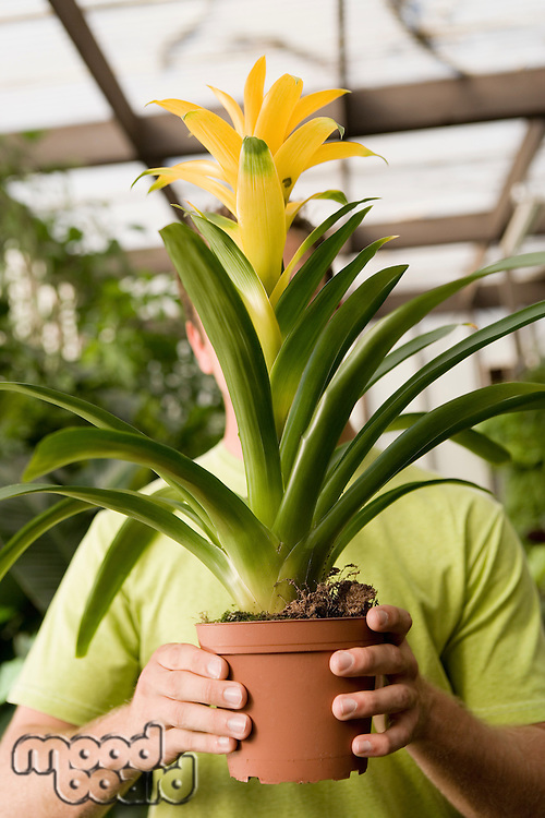 Man Holding Up Large Flowering Plant in Front of Face
