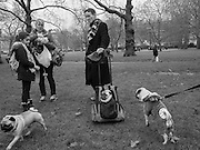 London Pugs monthly meetup, Green Park, London. 7 January 2017