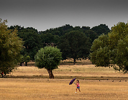 © Licensed to London News Pictures. 13/08/2020. London, UK. A child with an umbrella runs for cover from the rain in Richmond Park in South West London as thunderstorms and heavy rain hits London this afternoon after several days of dry hot weather which saw temperatures in excess of 35c ... The Met Office have issuing a yellow weather warning for thunderstorms for the London area with risk of flooding and possible travel disruption. Photo credit: Alex Lentati/LNP