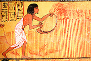 EGYPT, WEST BANK, THEBES Tomb of Sennedjem; harvesting wheat