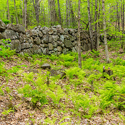 An old stone wall  at the Orris Falls Preserve in South Berwick, Maine.