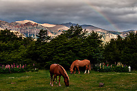 A Cat with Two Horses Grazing under a Rainbow in the Backyard of Hosteria El Pilar in El Chalten, Argentina - Patagonia. Image taken with a Nikon D3x and 50 mm f/1.4G lens (ISO 800, 50 mm, f/6.3, 1/500 sec).