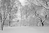 Winter in Central Park, Manhattan.