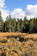 USA, Idaho, Valley County, McCall, Ponderosa State Park, The Lily Marsh
