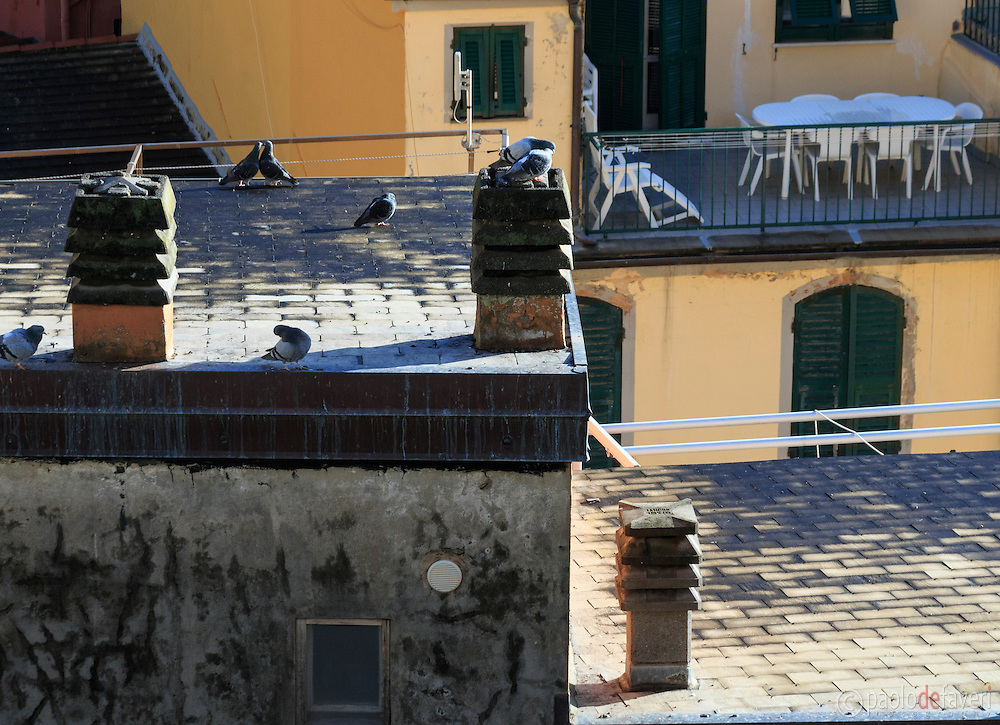Pigeons on the roofs in the centre of Riomaggiore, Cinque Terre, Italy