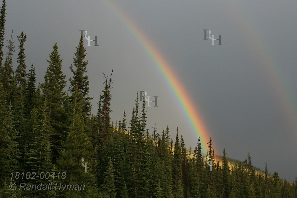 Rainbow soars above Bow Valley Parkway in Banff National Park; Alberta, Canada.