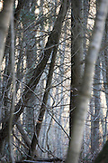 tree trunks in dense forest during late autumn season