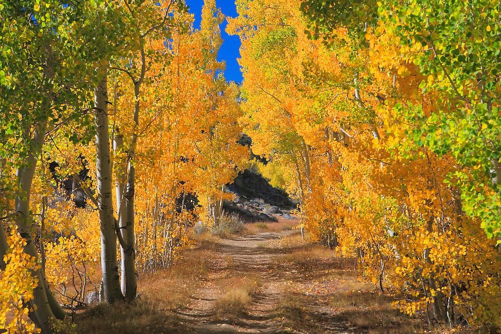 North Lake Road - Fall Color