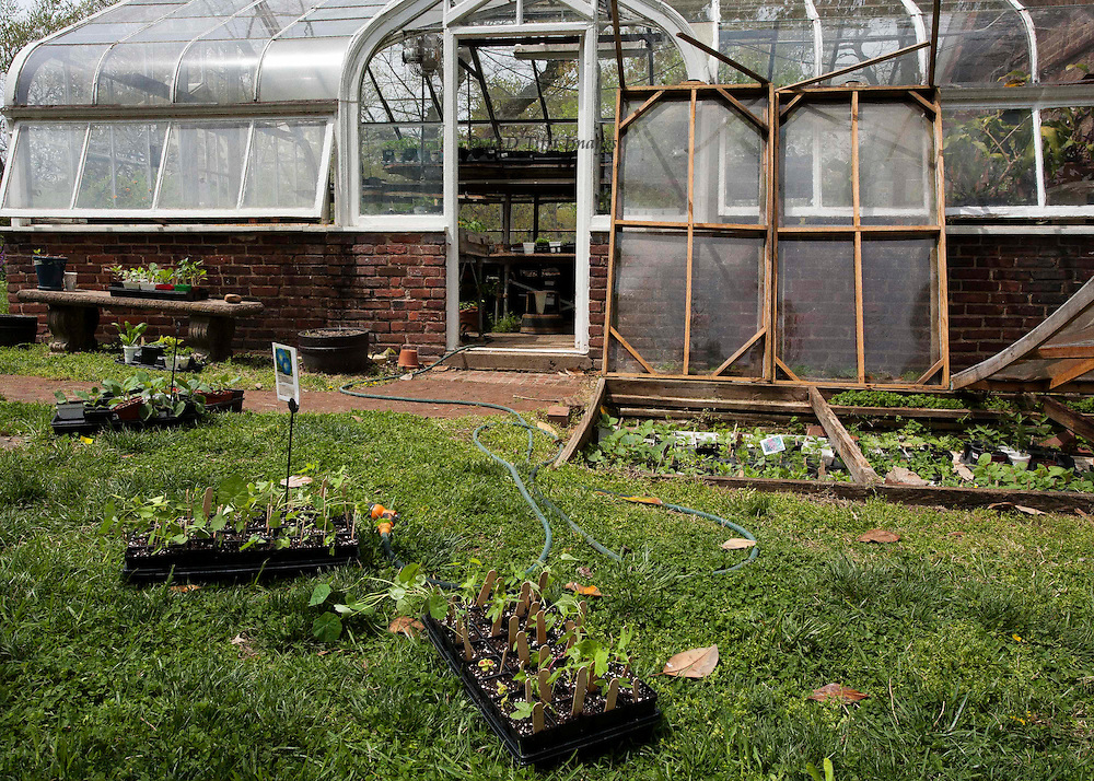 MVUC greenhouse; details of seedlings