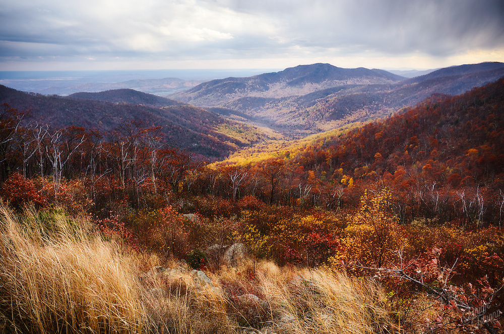 The valleys of Shenandoah are painted in a golden yellow and rusty amber during the transition of seasons. Even an occasional snowflake falls as a reminder that winter is just around the corner. Soon everything will be frosted over in a coating of snow and ice.