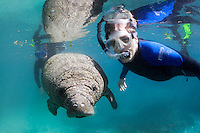Florida manatee, Trichechus manatus latirostris, a subspecies of the West Indian manatee, endangered. Two snorkelers observe an actively swimming manatee calf on a cool Florida day. Horizontal orientation and passive interaction. Three Sisters Springs, Crystal River National Wildlife Refuge, Kings Bay, Crystal River, Citrus County, Florida USA.