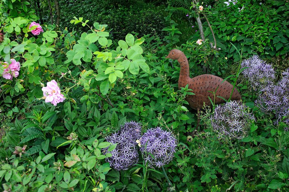 France, Languedoc Roussillon, Gard, Concoules, Jardin du Tomple, jardin remarquable, têtes d'ail d'ornement,Allium Christopii
