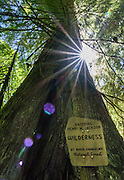 "The sun makes a starburst through tree, posted with sign ""Entering Henry M. Jackson Wilderness"" on Goat Lake trail #647, east of Barlow Pass in Mount Baker-Snoqualmie National Forest, in the Central Cascades, accessed from the Mountain Loop Highway, Washington, USA."
