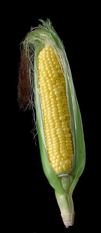 corn ear or cob