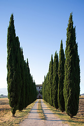 Trees line road to home in Umbria