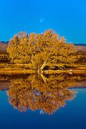 USA-New Mexico-MIsc.