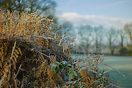 Millbrook Frost