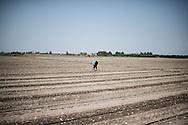 Cerignola, Italia - 22 agosto 2013. Un immigrato rumeno lavora in un campo di pomodori nei pressi di Foggia in Puglia.<br /> Ph. Roberto Salomone Ag. Controluce<br /> ITALY - An immigrant works in a tomato field near Cerignola in the italian southern region of Puglia on August 22, 2013.