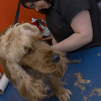 Dog Grooming<br />