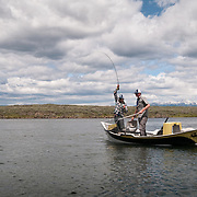 A fly fisherman brings a rainbow trout to the net while fishing from a drift boat on the Henry's Fork of the Snake River, Idaho.