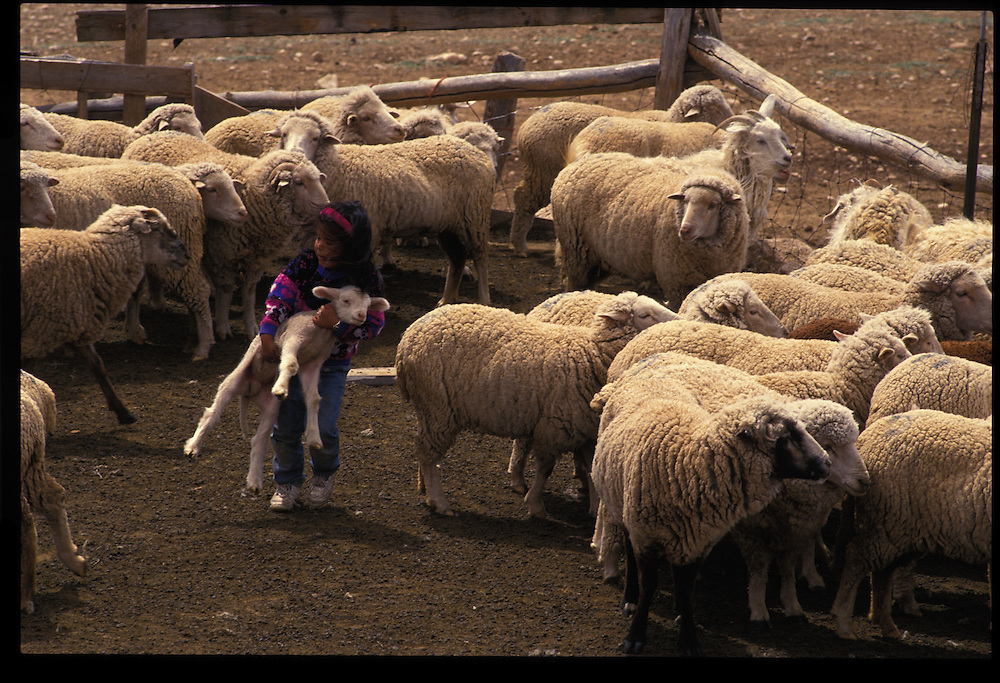 Kristie Tsosie (4 - grandchild) at Mary and Henry Lane's Bodaway sheep camp.
