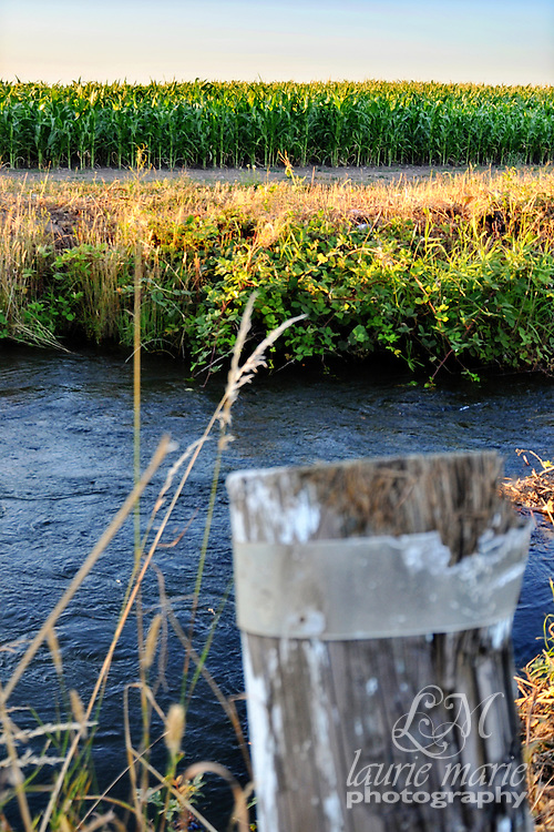 A little river running past a cornfield in rural Western Oregon.