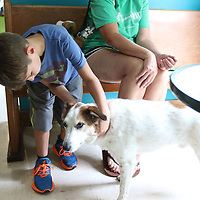 Gunner Kilgore, 7, pets one of the doctors dog, Mitchell, at Tupelo Small Animal Hospital's open house Saturday