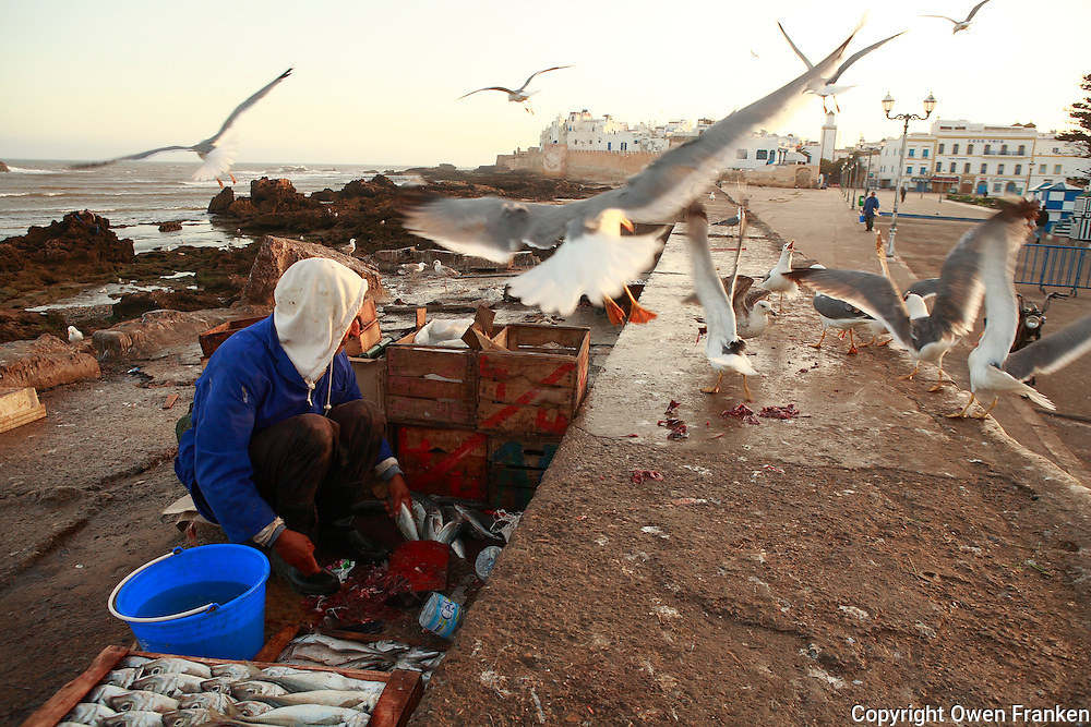 cleaning fish in morocco