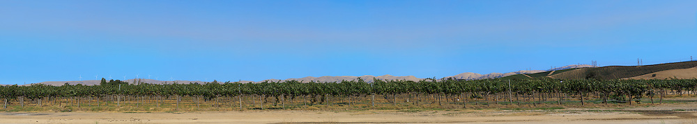 Vineyard. (63694 x 11430 pixels)