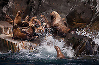 Steller sea lions at rookery east of Long Island in the Kodiak Island archipelago, Gulf of Alaska