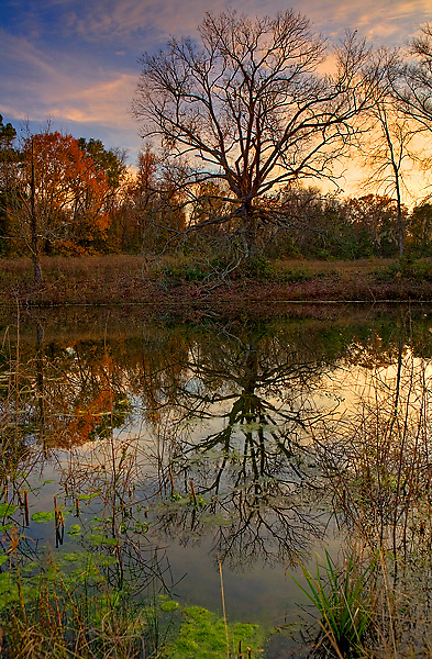 Stock photo of a tree at the edge of a pond on remote farmland